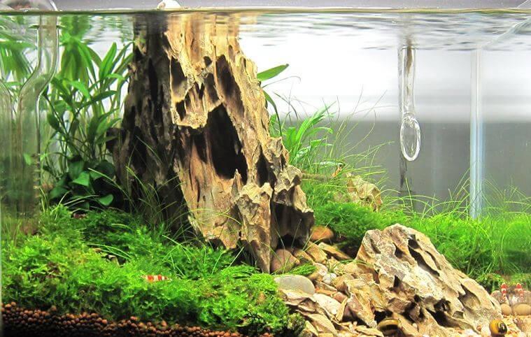 Methods (How to increase pH in aquarium).