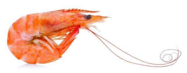 Shrimp, Sardines, And Crayfish - what does koi eat