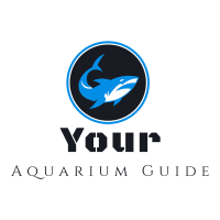 Your Aquarium Guide