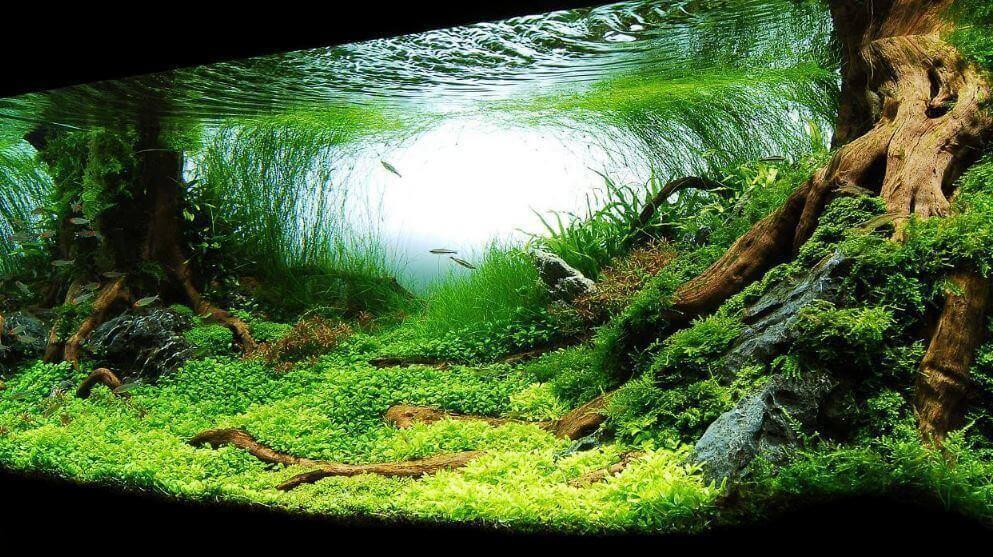 How to raise pH in Aquarium? [Methods to increase pH in Aquarium]
