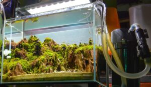 How To Set Up A Canister Filter For Aquariums? [Steps to Follow]