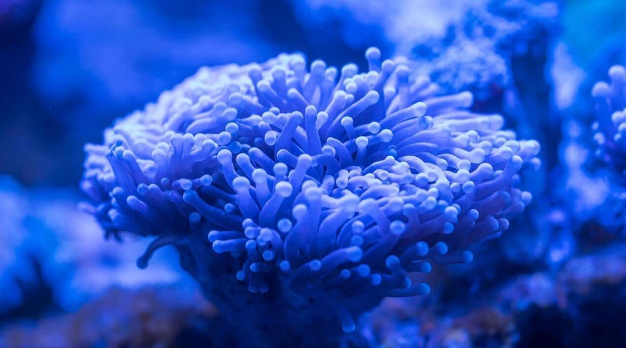 10 Best Reef Salts Of 2021 – Your Aquarium Guide