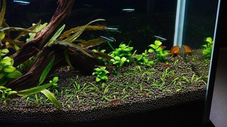 best betta substrate