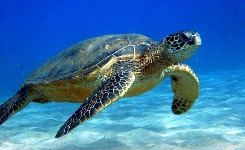 best turtle food for red eared slider