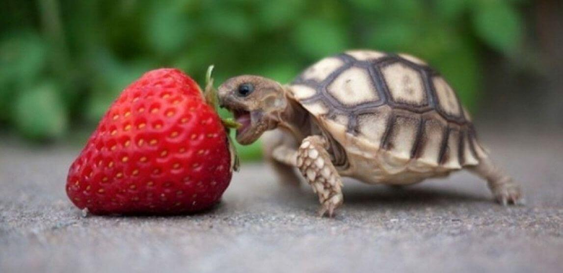 10 Best Turtle Food Reviewed [Buyers Guide-2021]