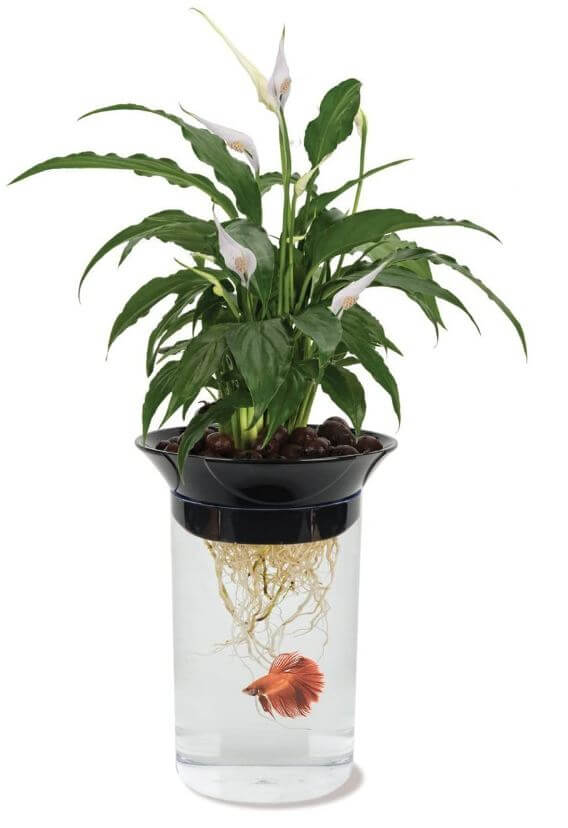 1) Penn Plax Natural Betta Fish Plants