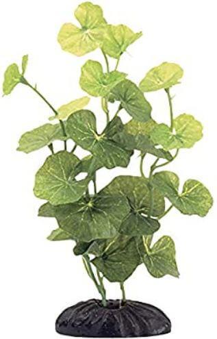 9) Marina Hydrocotyle Plants For Betta