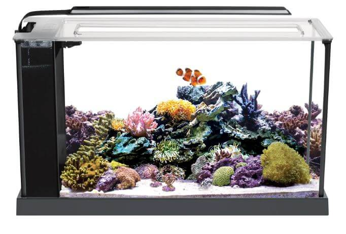 3) Fluval 05 Gallons Reef Tank