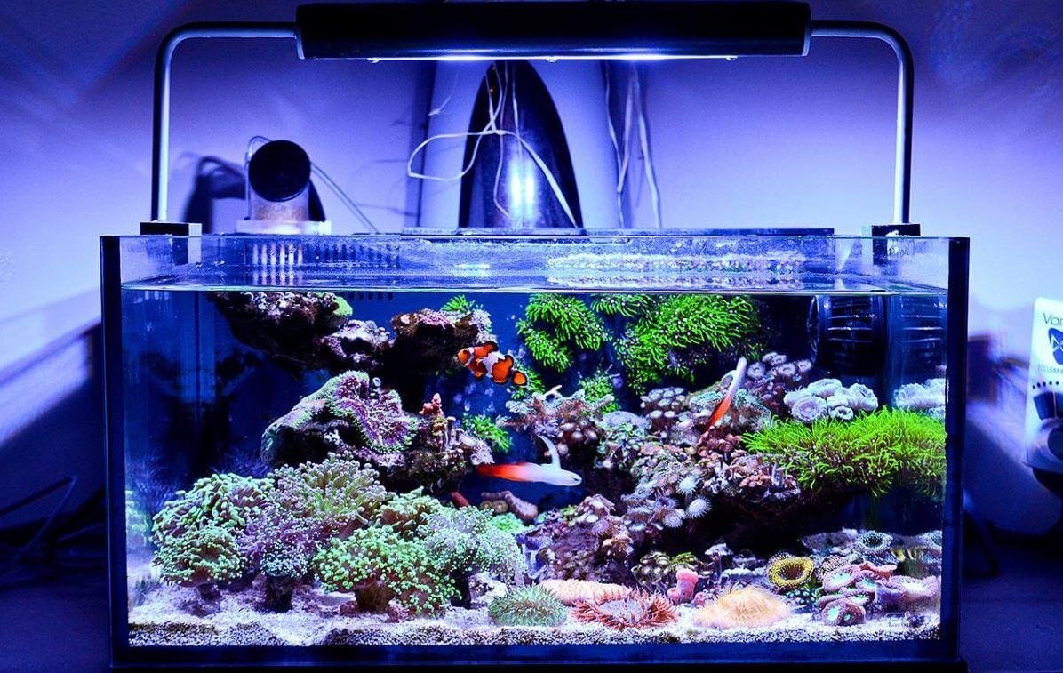 10 Best Nano Reef Tanks Reviewed  [Buyers Guide – 2021]