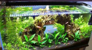 10 Best LED Lights For Planted Tank Reviewed – 2021