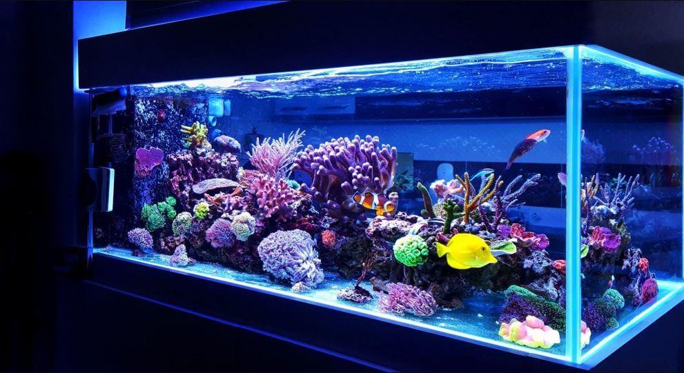 10 Best LED Lighting For Reef Tanks | 2021